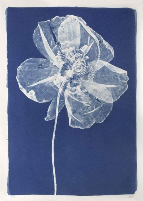Anna Atkins, cyanotype, 1844 (1)